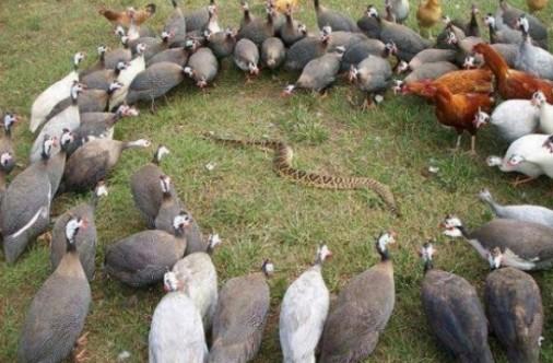 [Image: birdsnake.jpg]